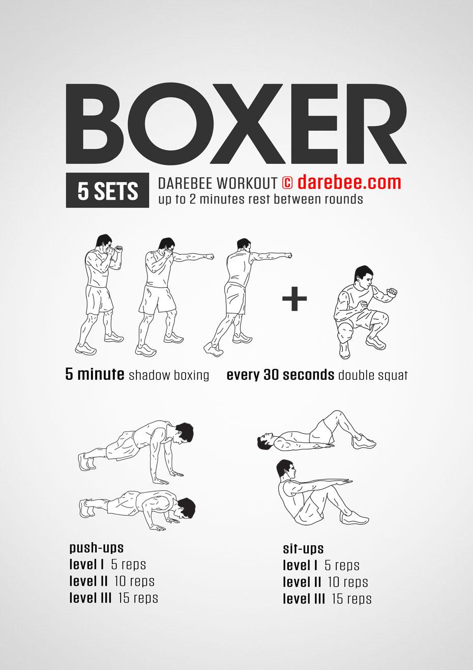 Boxer Workout A Boxer's Workout