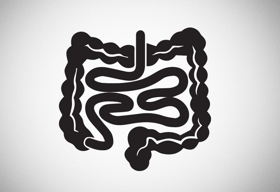 Gut Microbiome 101