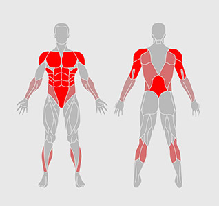 Push Up Muscles Worked Diagram